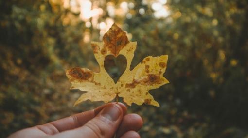 Fall Into Autumn Gratefully